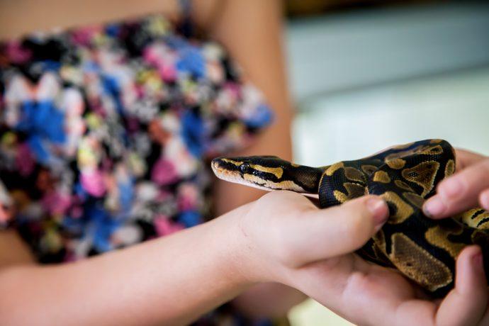 animaux de compagnie pour enfants serpent