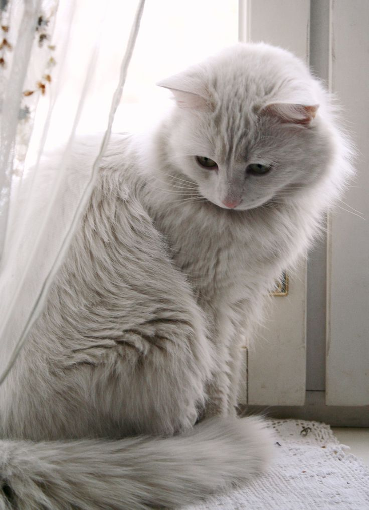 Is Your Cat In Pain The Signs You Need To Look Out For