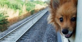 7452013-cute-dog-on-the-train-window-1024x683