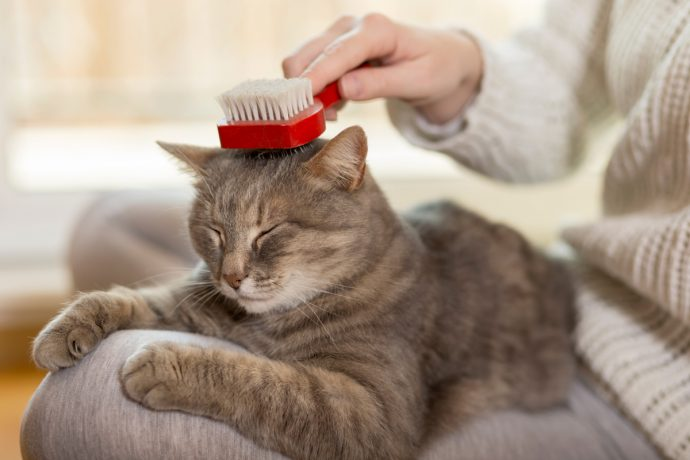cat coat grooming