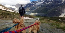 zermatt mutts