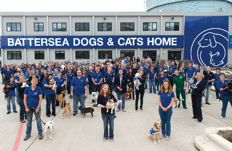 Guide Dog Rehoming >> Battersea Dogs & Cats Home / PetsPyjamas