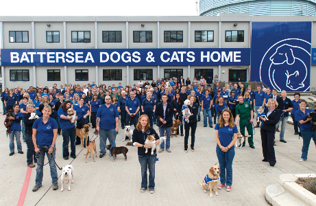 Dog Rescue Jobs London