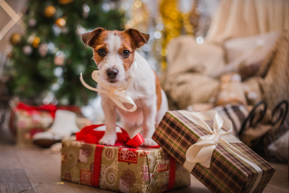 Top 10 tips to keep your pet safe this Christmas