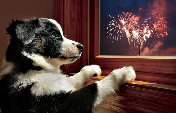 Image result for pet safety bonfire night