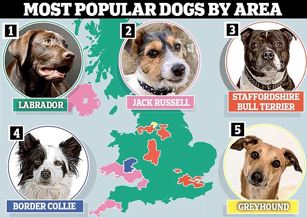 most popular breed