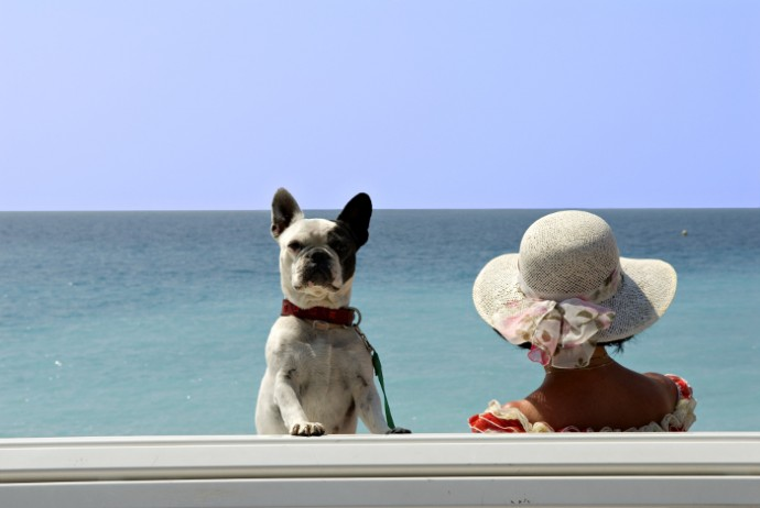French bulldog on beach pet passport