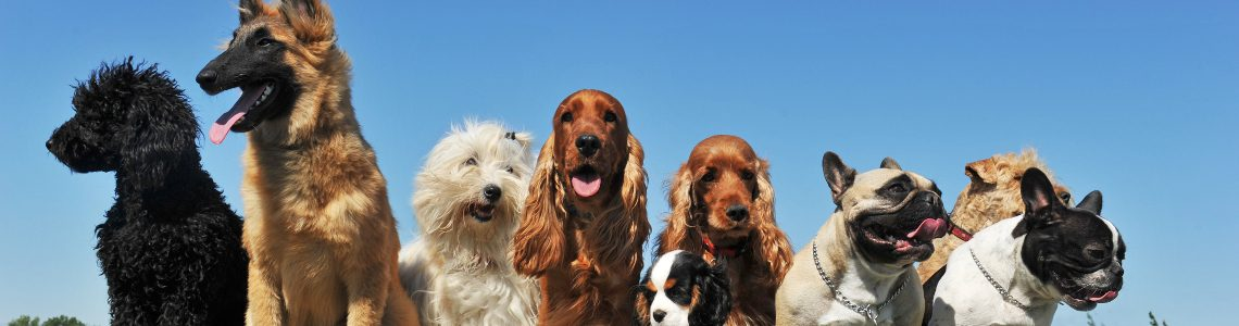 which dog breed suits your lifestyle petspyjamas