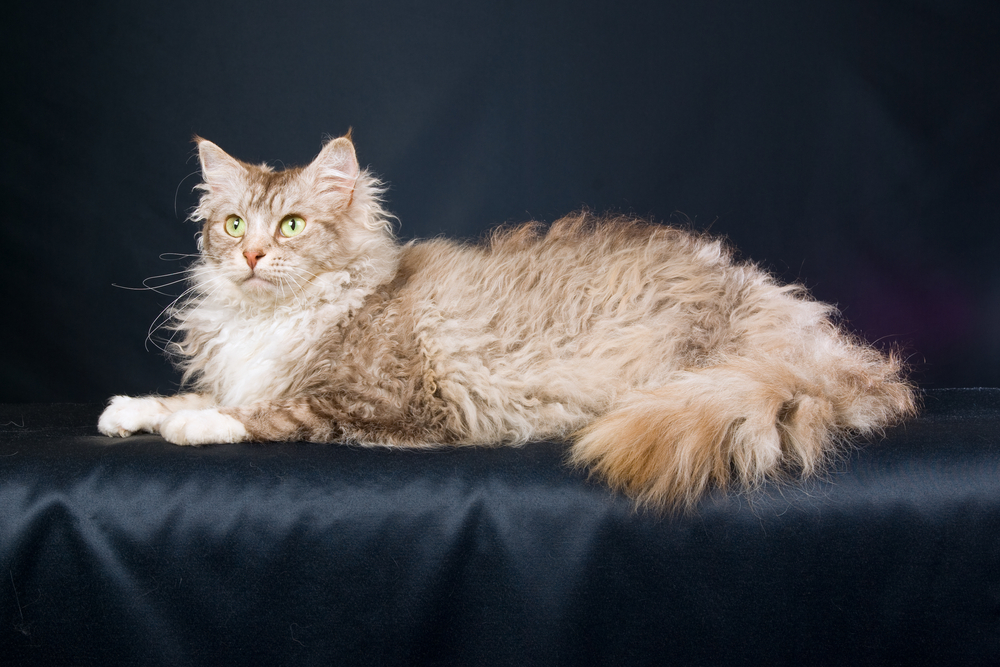 What Causes A Cat To Loose Hair