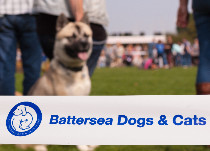 Battersea Dogs Home Open Day