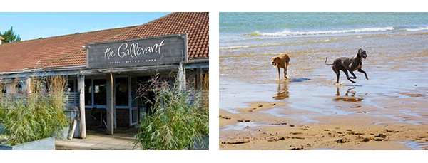 Top Ten Dog Friendly Beaches