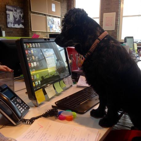 maisy at work