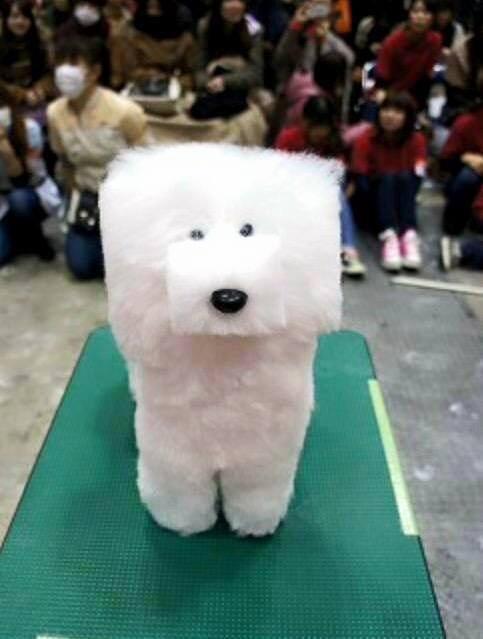 Show Dog Grooming Box