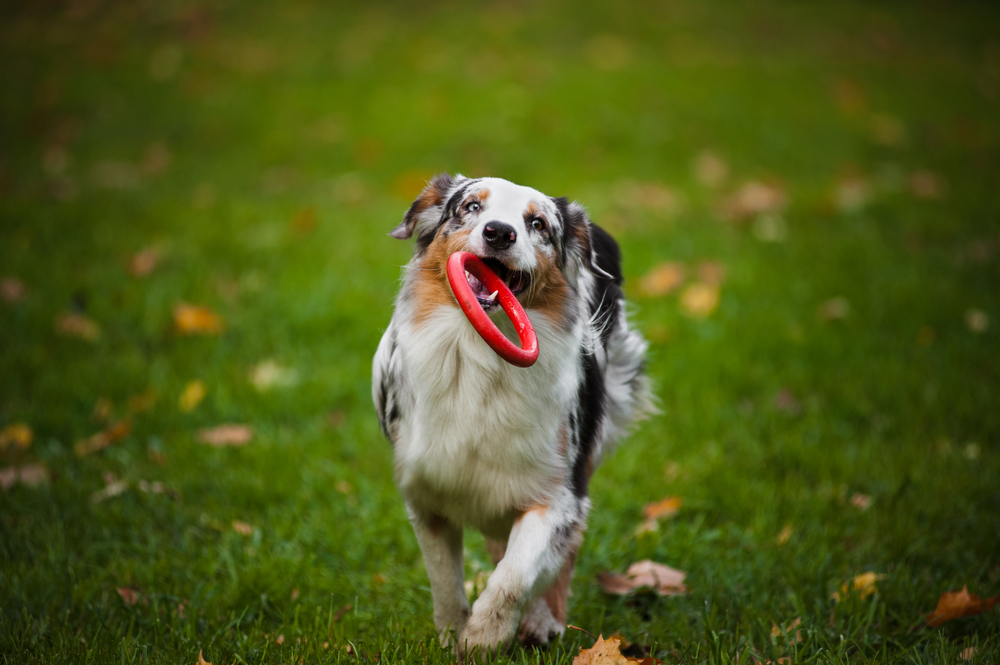 Active Dogs That Can Live In Apartments