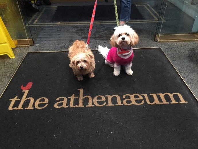 Heidi & Lulu at The Athenaeum