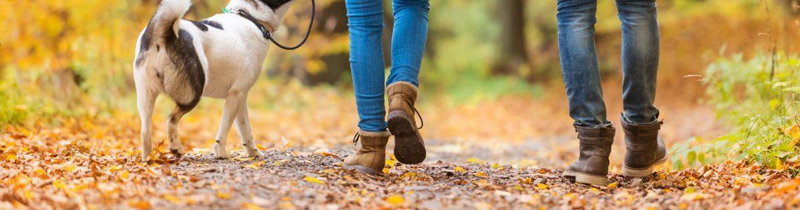 Top 10 Dog-friendly Walking Holidays
