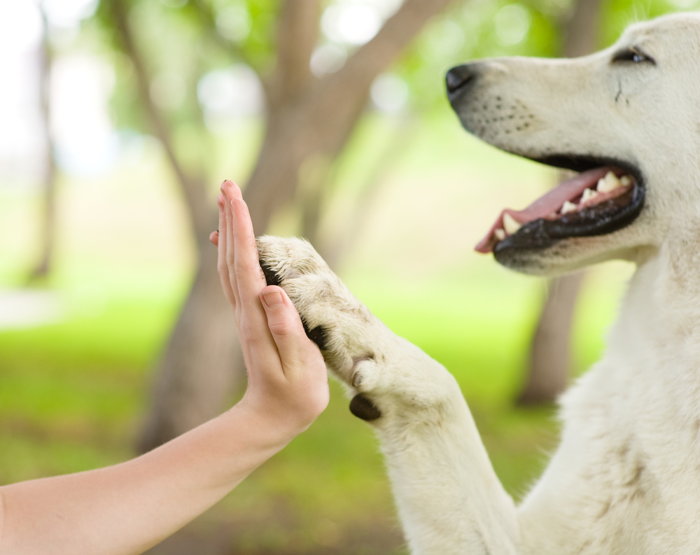 Top 10 Facts about Dog Paws