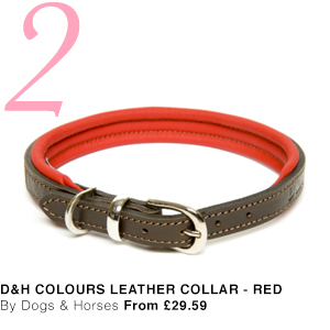 Dogs & Horses Leather Dog Collar