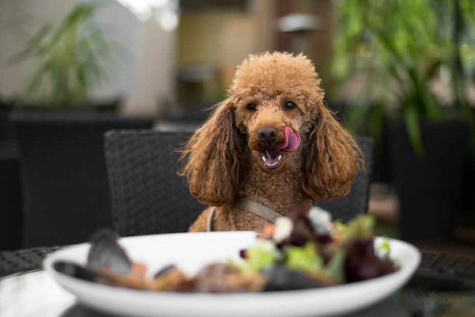 Dog Friendly Pubs In Cullompton