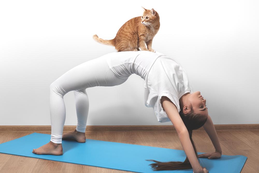 Прикольные картинки тренировка йога