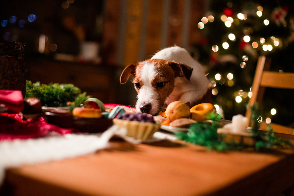 Christmas dinner Dos and Don'ts for pets