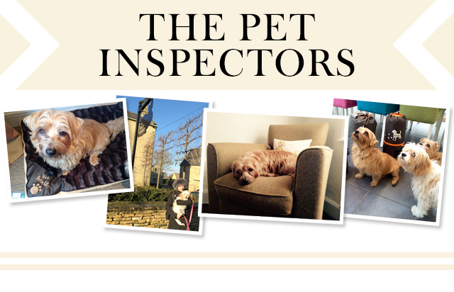 the-pet-inspectors-header