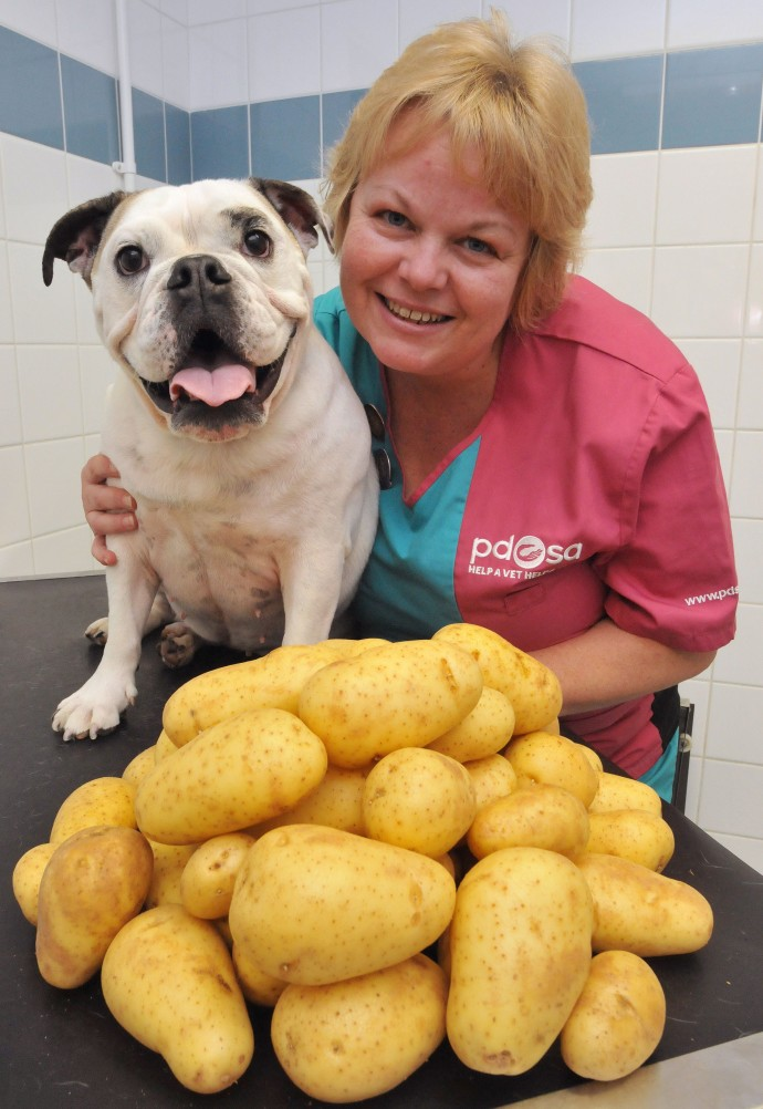 Daisy AFTER with PDSA Head Nurse Steph Williams, the potatoes show how much weight Daisy lost!