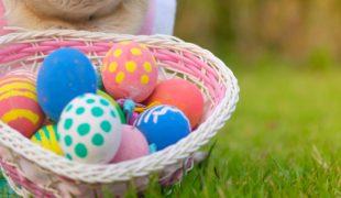 How to make an Easter egg hunt for your dog / PetsPyjamas