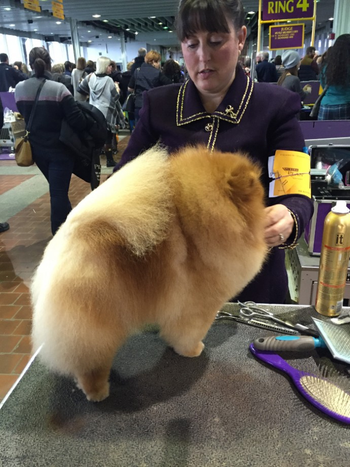 westminster dog show NYC (5)