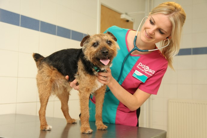 Brad with PDSA Senior Vet Aimee Labbate