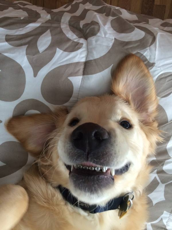 dog with braces 2