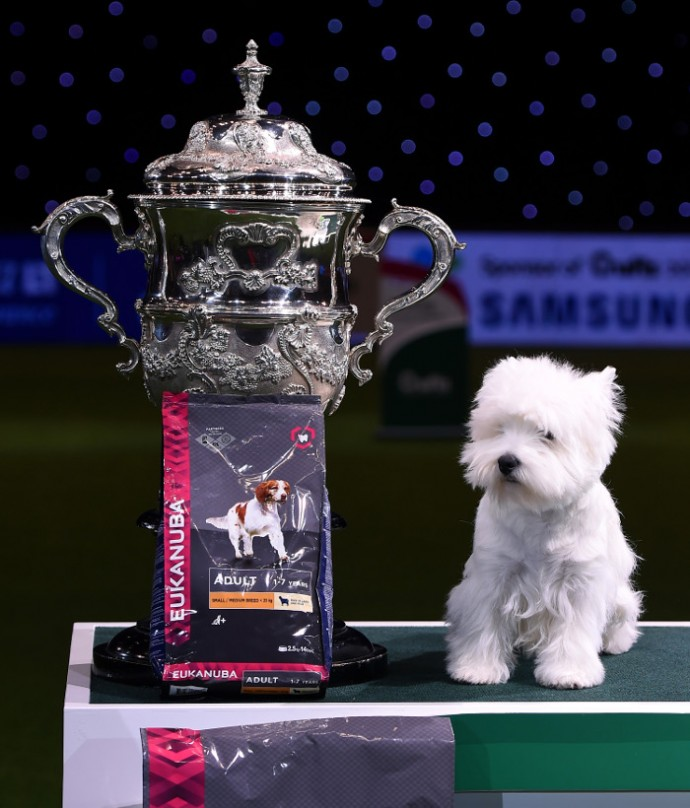 wins Best In Show at Crufts Dog Show 2016 on March 13, 2016 in Birmingham, England.