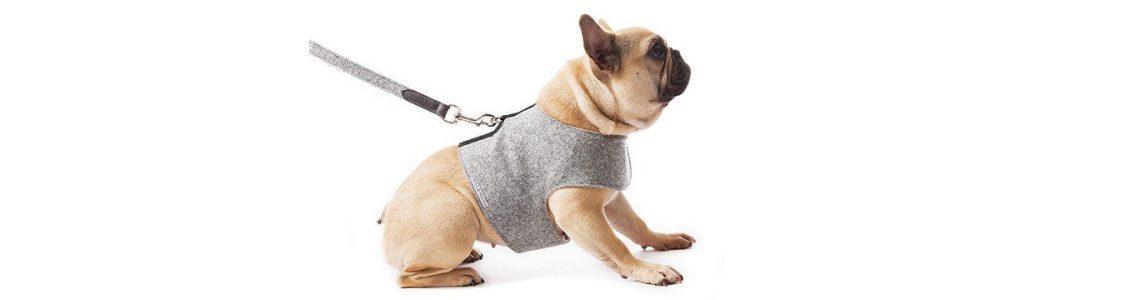 Stylist Magazine Super Stylish Dog And Cat Accessories Petspyjamas