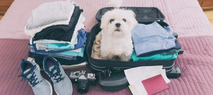 dog-travelling-in-suitcase-packing