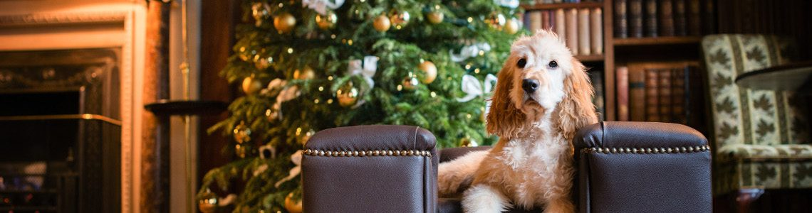 Top 5 Last-minute Dog-friendly Christmas and New Year's Eve Breaks
