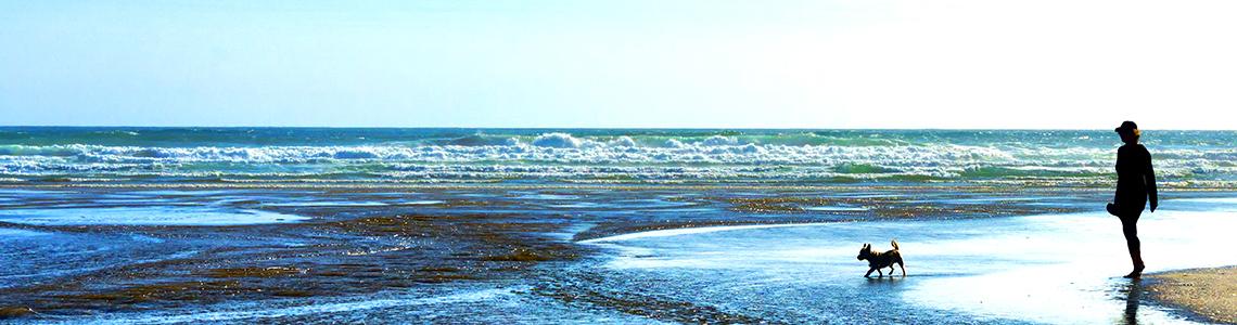 All Year Dog Friendly Beaches South Devon