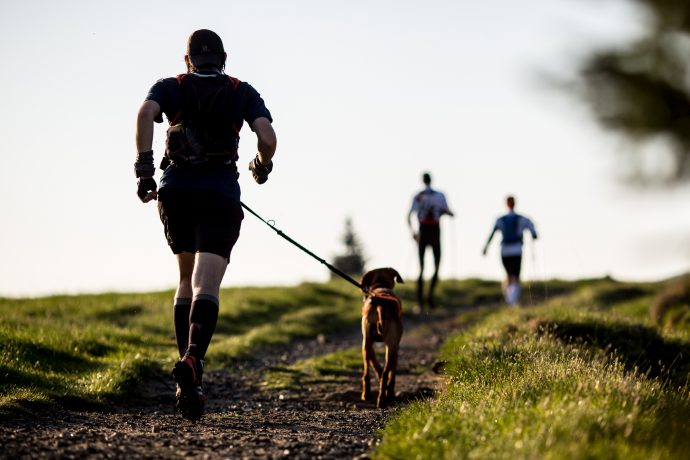 the dog jogger health tips