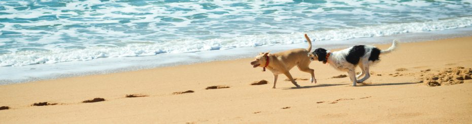 dog friendly holiday beach