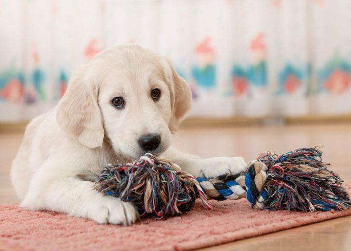animaux de compagnie pour enfants chien
