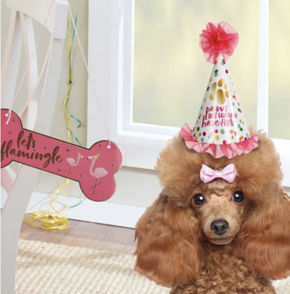 Poodle dog flamingo themed dog party