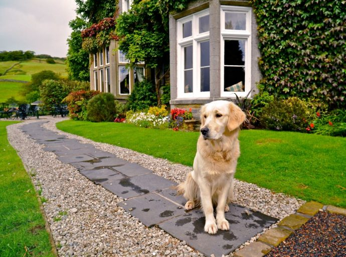 dog-friendly Holbeck Ghyll in lake district