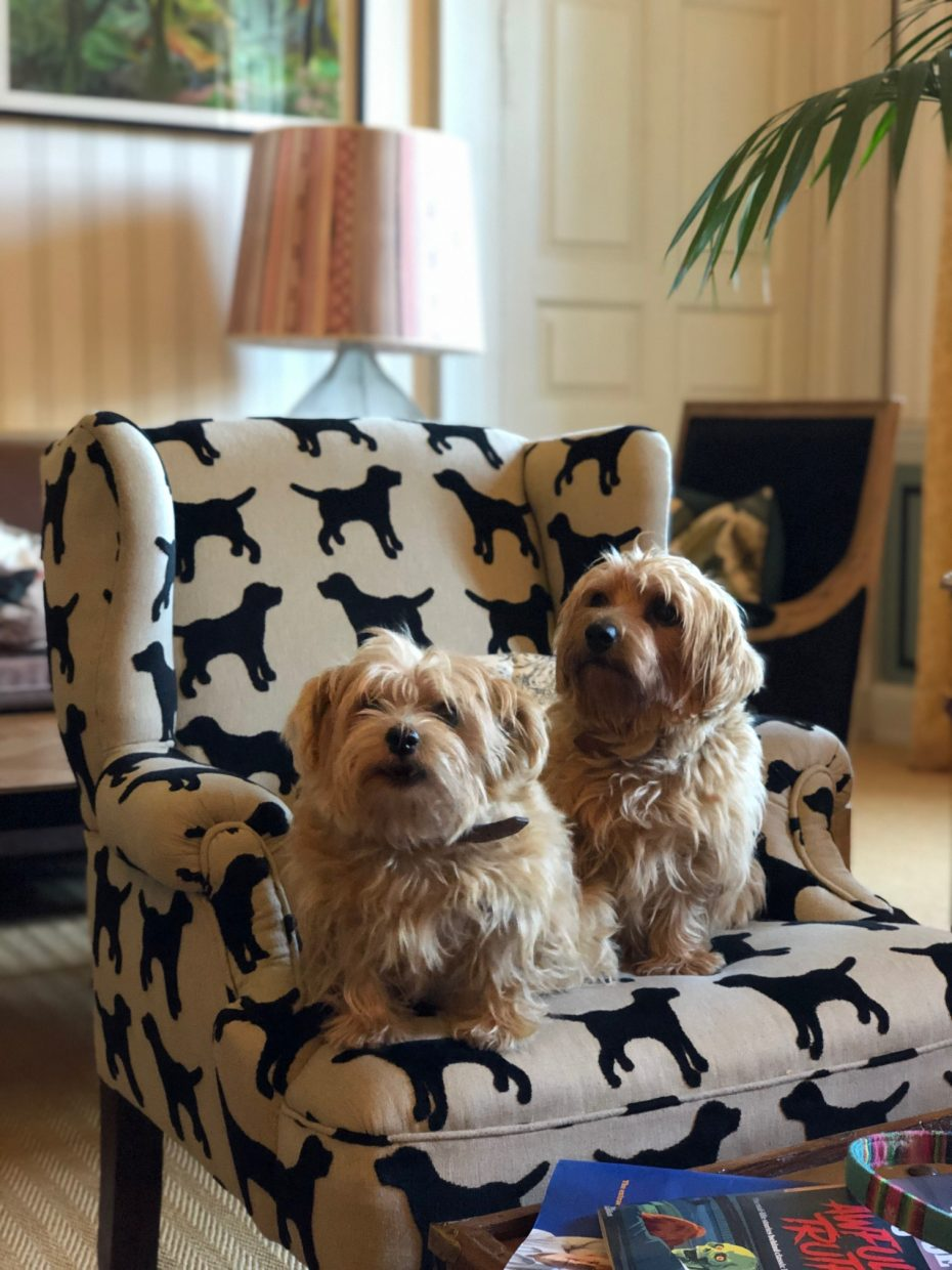 10 Castle Street Pet Inspectors Dog Friendly Travel PetsPyjamas