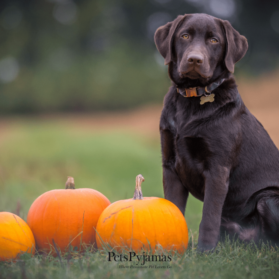 dogs with pumpkin dog recipe