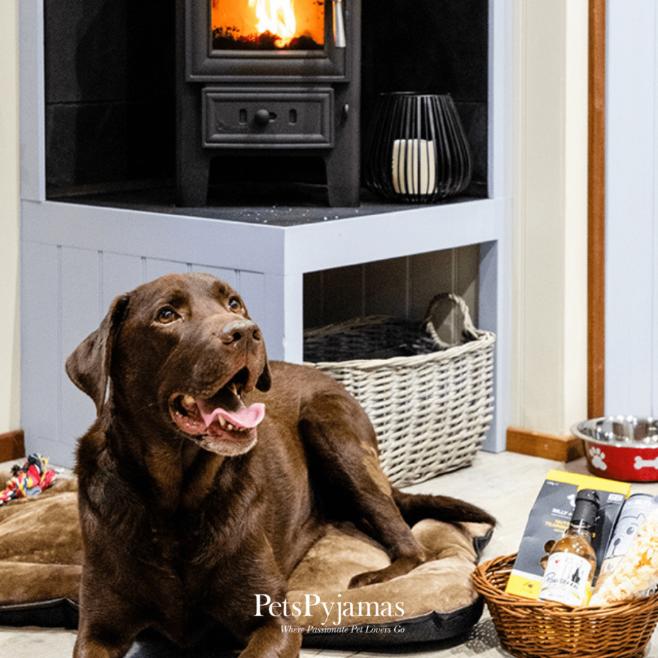 dog in front of fire at PetsPyjamas