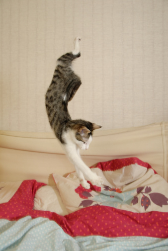 cats jumping