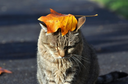 pets in the autumn season